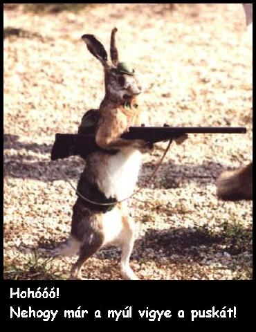 """ Lest not the rabbit have a gun"""
